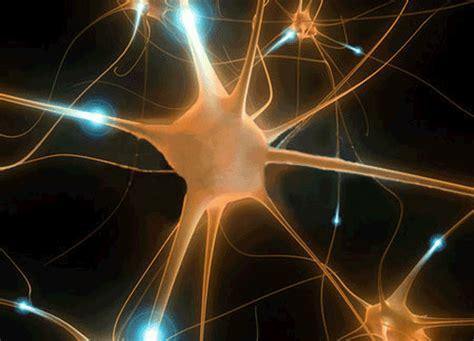 alimenti che producono serotonina neurotrasmettitori perch 233 l alimentazione influenza l umore