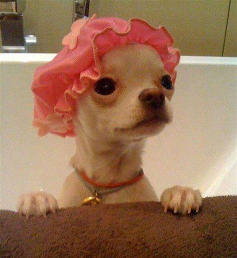 what is dogs in a bathtub mean what does dogs in the bathtub mean 28 images what does