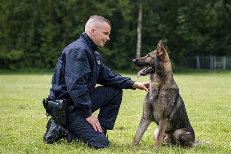 Bewerbung Polizei Trotz Vorstrafe diensthunde