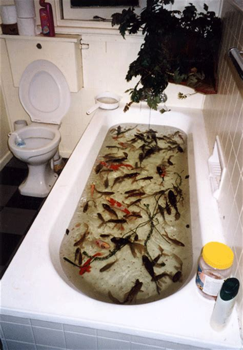 fish in bathtub 7 reasons that a dream bath is better than an actual bath