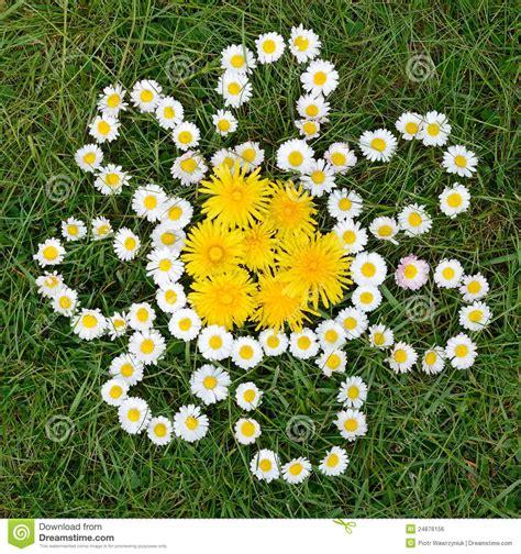 fiori dente di composizione nei fiori dente di e della