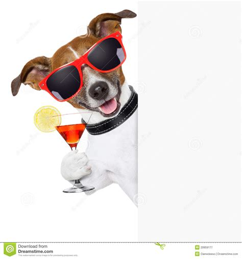 cocktail dogs cocktail royalty free stock photography image 29959177