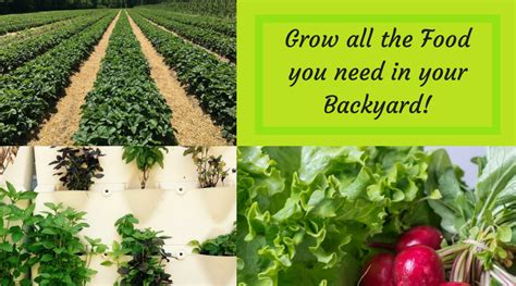 Can You A In Your Backyard by Grow All The Food You Need In Your Backyard Nourish The