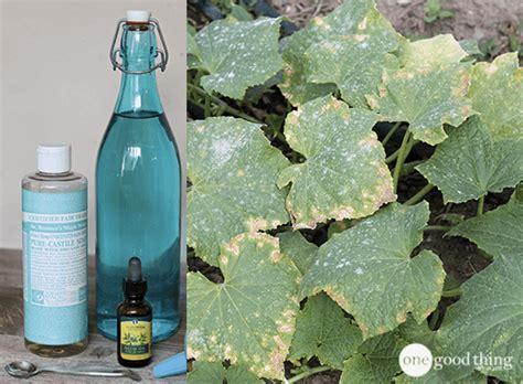 organic oil soap garden spray  good