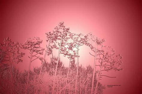 bureau gratuit les plus beau fond ecran fleurs fond ecran pc avec fond