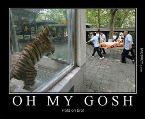 tiger memes funny tiger pictures memey com