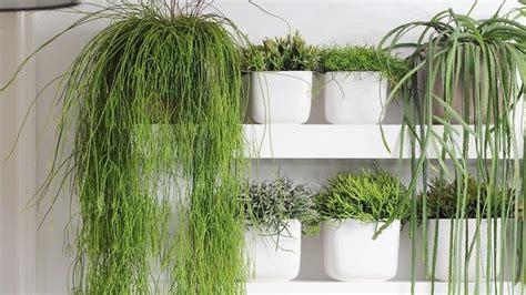 Bienfaits Du Cactus Dans Une Maison by Les Bienfaits Des Plantes D Int 233 Rieur L Atelier De L Habitat