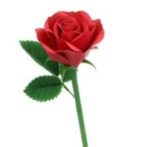 imagenes de rosas rojas para una madre actividades manuales de flor de papel rosa amarilla es