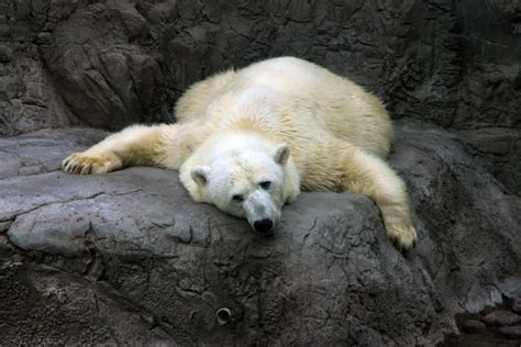 climate change causes animals to shrink climate change is animals shrink grist