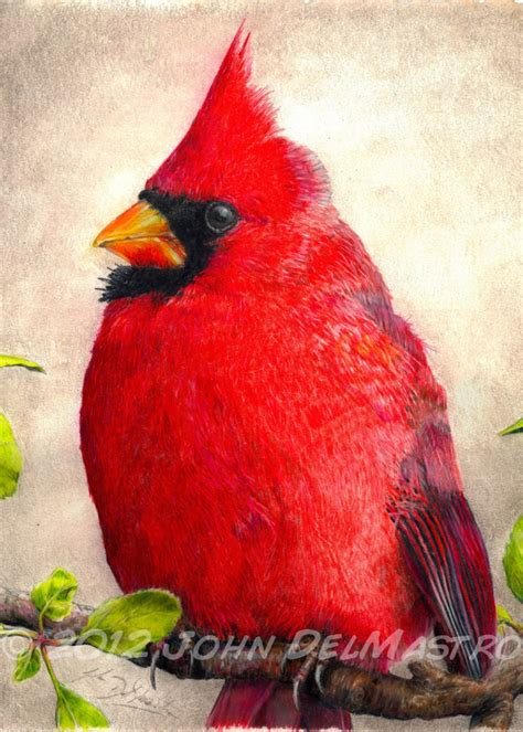 what color are cardinals colored pencil drawings aceo atc size print