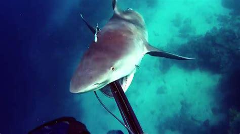 ataque de tiburon submarino en sudafrica ataque de tiburon submarino en sudafrica tibur 243 n ataca por