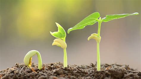 rich soil powerpoint template backgrounds id 0000007139 time lapse grow sprout from seed isolated on white