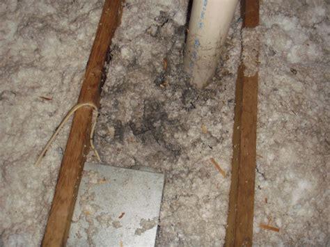 venting bathroom fan into attic moisture problems in attic building consultants inc