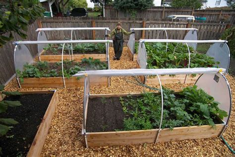 How To Start A Backyard Vegetable Garden by Top 10 Winter Vegetable Garden The In