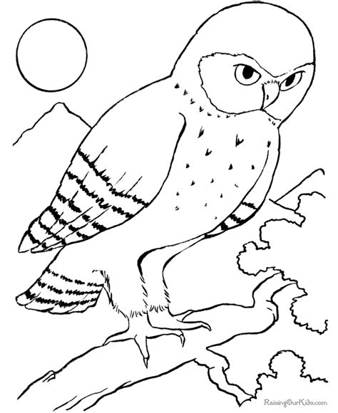 coloring pages of animals and birds owl coloring pages for animals coloring pages for