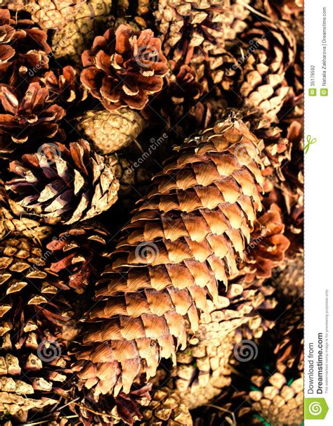 Brown By Dreamcone Soflens collection of brown pine cones for backgrounds or textures clo stock photography image 35179592