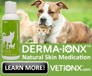 how to treat skin on dogs skin disorders and how to treat them breeds picture