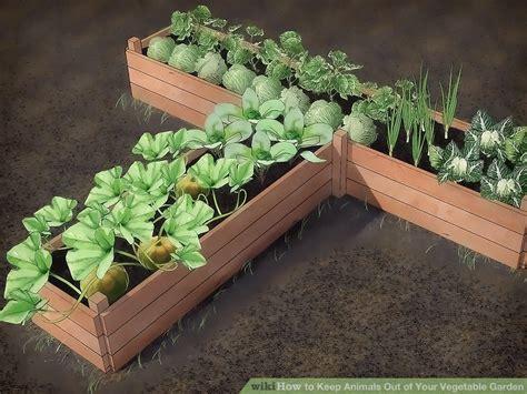 Ants In Vegetable Garden Bed Best Idea Garden Ant In Vegetable Garden