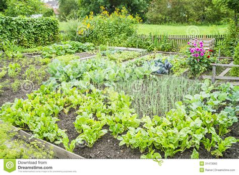 garden vegetable patch vegetable garden patch stock photo image 31473060