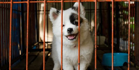 famous  city  legally requires pet stores