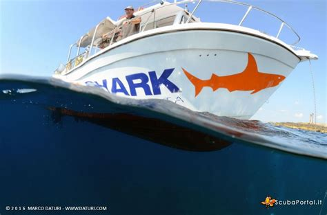 orange shark orange shark diving experience