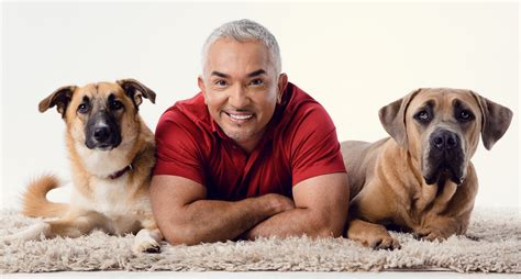 cesar millan puppy saturday march 24 2018 cesar millan center for the arts escondido