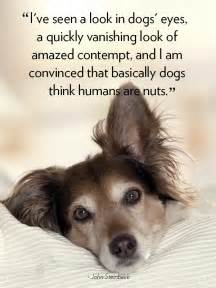 11 dog quotes that will melt your heart happy walk happy dog dog walking pet sitting