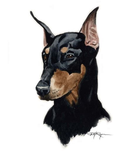 how to a doberman puppy doberman pinscher print signed by artist dj rogers