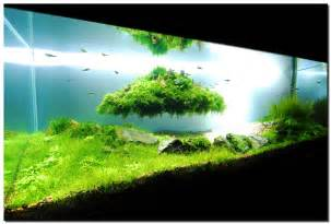 aquascape indonesia