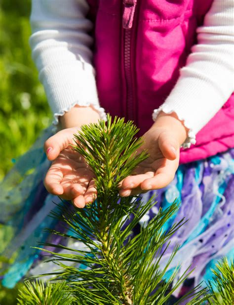 misa christmas tree farm gives us their top tips for tree care
