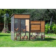 coops feathers extreme walk  chicken coop  height