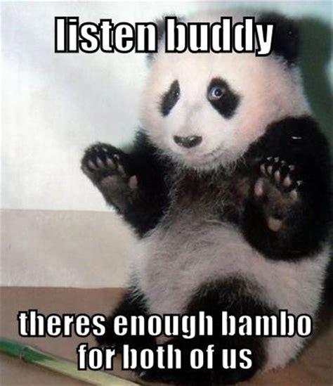 Funny Animal Meme Pictures - enough bamboo funny animal meme