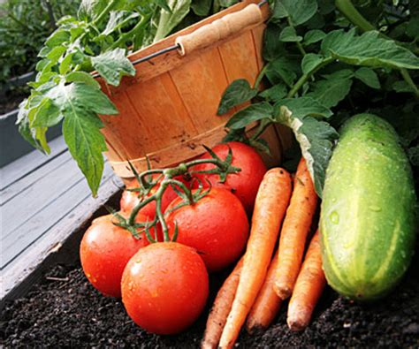 planting times for garden vegetables vegetable garden planting schedule search results new