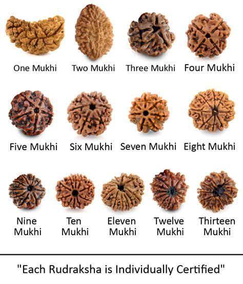 rudraksha meaning and mukhi types buy one to thirteen mukhi rudraksha nepali seeds combo