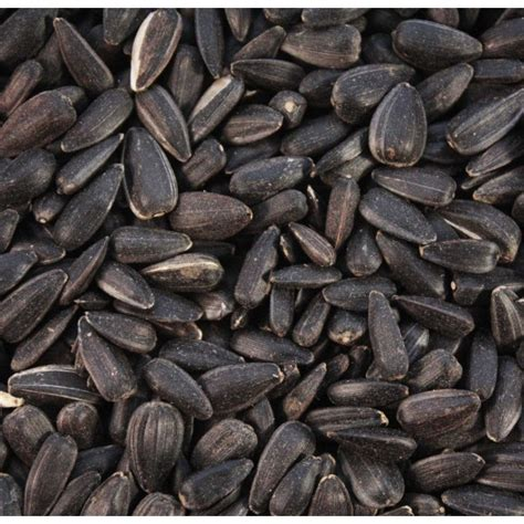 black sunflower seeds british wild bird food and habitat