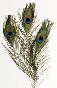Decorating Ideas Using Peacock Feathers Decorating Ideas Amazing Image Of Green And Blue Peacock