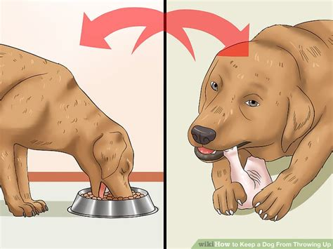 puppy throwing up food hours after how to keep a from throwing up 12 steps with pictures