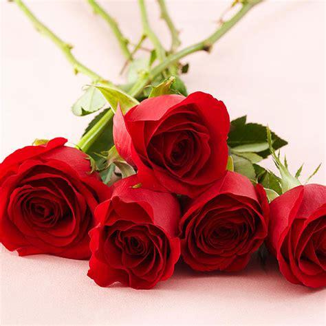 Alaya Merah 2017 saikan pesan cinta lewat bunga romantis