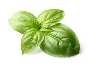 6 essential plants for your kitchen medicine cabinet