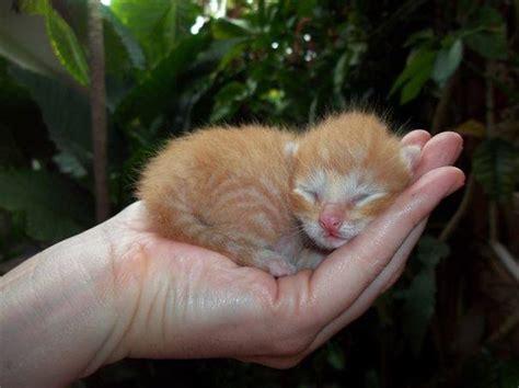 imagenes animales para bebes 25 fotos de bebes en el reino animal te enamoraran