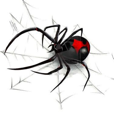 black widow spider tattoo designs black widow spider web design