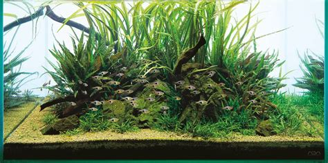 ada aquascape ada aqua soil malaya and africana aquascaping wiki