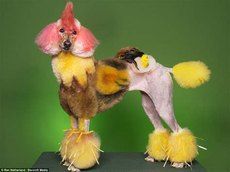 chicken dogs the poodles transformed into pandas horses and even snails at creative grooming