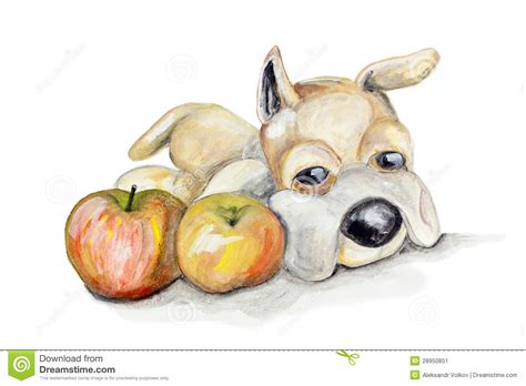 dogs and apples teddy and apples stock image image 28950851