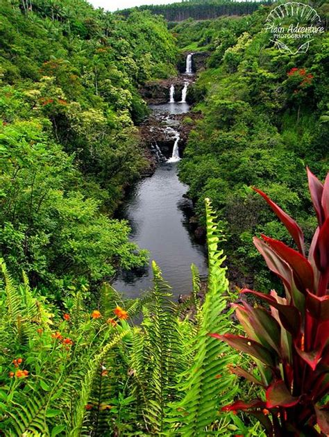 Big Island Botanical Gardens Gardens Islands Of Hawaii And Beautiful Places On Pinterest