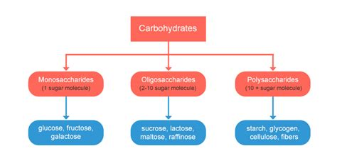 carbohydrates 4 types carbohydrates and types of carbohydrates agrotopia