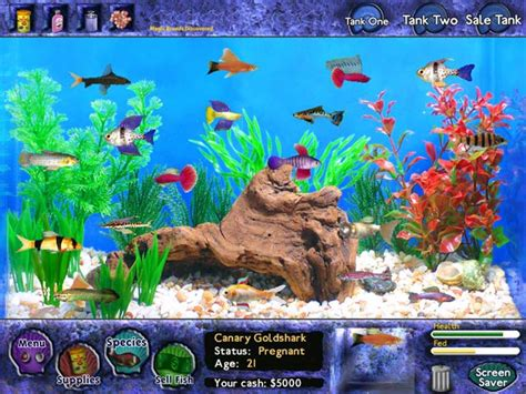 Can You Win Real Money On Big Fish Casino - fish tycoon for mac download play on your mac computer download free mac games