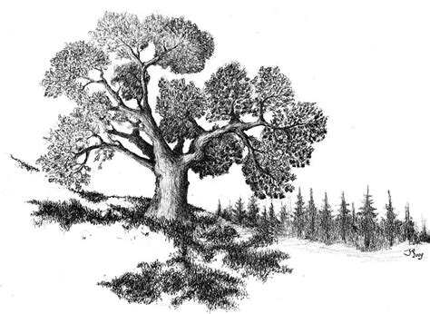 oak tree drawing old oak tree drawing by joeri van royen