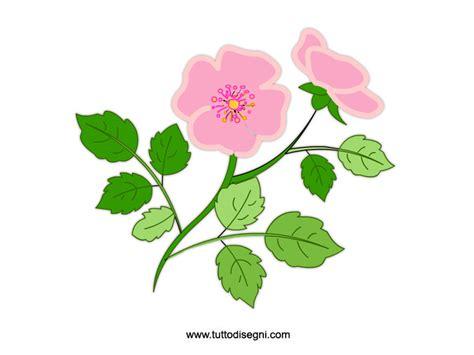 rosa fiori fiori rosa da stare tuttodisegni
