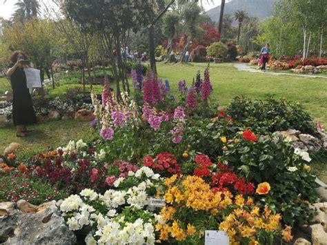 liguria fiori pioggia di premi per piante e fiori della liguria